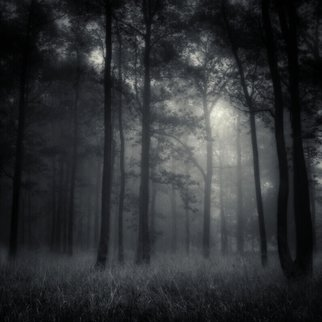 Jaromir Hron; Deep Forest, 2010, Original Photography Black and White, 600 x 600 mm. Artwork description: 241  forest, autumn, mist, monochrome, melancholy, b& w ...