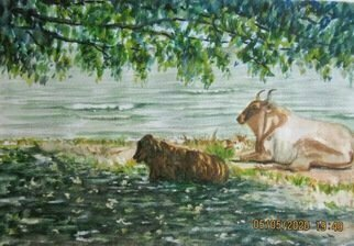 Mary Jean Mailloux; Brahmain Bathers, 2020, Original Watercolor, 10 x 7 inches. Artwork description: 241 Cooling off by the shore under a shady tree, these Brahmain beauties took refuge from the sun on lake Nicaragua.  ...