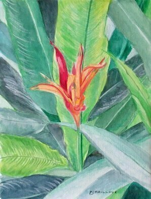 Mary Jean Mailloux; Common Bird Of Paradise, 2020, Original Watercolor, 6 x 8 inches. Artwork description: 241 So exotic and yet so common in Costa Rica, this beautiful flower is often hidden in the lavish greenery of its leaves.  But the striking contrast of its vivd red petals against the green, beckons a second look...