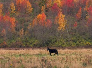 Charles Baldwin; Black Horse Autumn Color, 2019, Original Photography Digital, 25.5 x 19.1 inches. Artwork description: 241 I was driving through the hills of Pennsylvania and found this panorama. ...