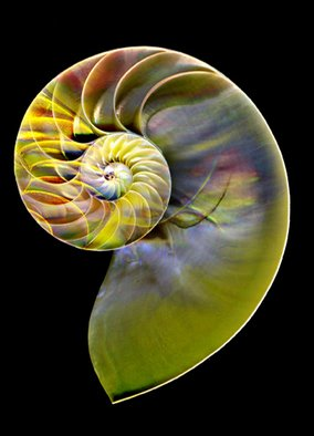 Maureen Chase; Colored Nautilus, 2010, Original Photography Other,   inches. Artwork description: 241       abstract      ...