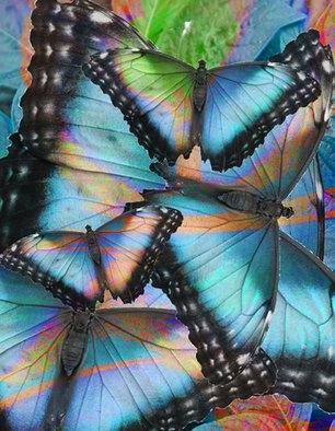 Maureen Chase; Colored Wings, 2010, Original Digital Art,   inches. Artwork description: 241      abstract     ...