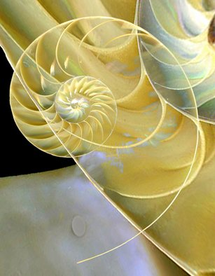Maureen Chase; Nautilus 2, 2010, Original Photography Other,   inches. Artwork description: 241       abstract            ...