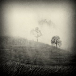 Michael Regnier; 2 Trees In The Fog, 2010, Original Photography Color, 20 x 20 inches. Artwork description: 241  vineyard, vineyards, fog, trees   ...