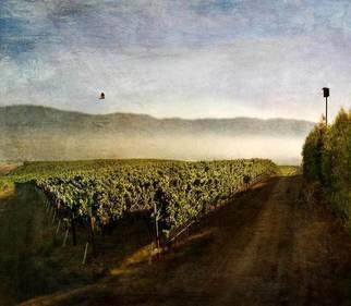 Michael Regnier; Flying Home, Seco Highlan..., 2010, Original Photography Color, 20 x 20 inches. Artwork description: 241      vineyard, vineyards,     ...