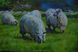 Abigail Rhodes; Wensleydales On The Wharfe, 2008, Original Painting Oil, 20 x 16 inches. Artwork description: 241  Wensleydale Sheep grazing on the river Wharfe at Kettlewell ...