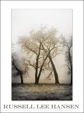 Russell Hansen; Embrace, 2007, Original Photography Color, 11 x 14 inches. Artwork description: 241  Two trees have grown together locked in a natural