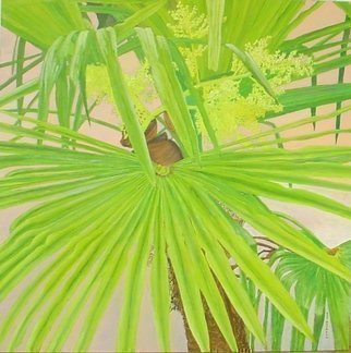 Guy Octaaf Moreaux; My palmtree in bloom, 2007, Original Painting Oil, 100 x 100 cm. Artwork description: 241  The palm tree on the terrace in Buenos Aires is obviously happy there.  Being born in a cold climate, I have always had a facination with palm trees. ...