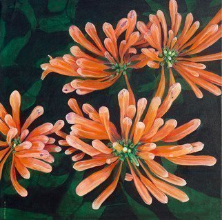 Guy Octaaf Moreaux; Flame Vine, 2019, Original Painting Oil, 100 x 100 cm. Artwork description: 241 Flame vine , also called Orange trumpets, grows well in Kenya.  A stunning flower in my opinion.  Here is the bloom before the flowers actually open up.Painted on canvas. ...