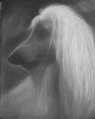 Adrian Pickett; Afghan Hound, 2007, Original Drawing Charcoal, 20 x 26 inches. Artwork description: 241  original portrait done in charcoal on paper ...