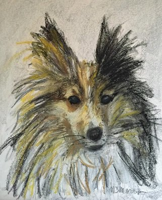 Christine Morris; Sweet Sheltie, 2015, Original Painting Acrylic, 9 x 11 inches. Artwork description: 241  dog, pet, portrait, pastel, white, brown, cute, fluffy, sheltie, puppy, sheepdog, small ...