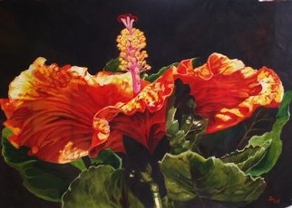 Sharon Fox Mould; Hibiscus Face To The Sun, 2010, Original Painting Acrylic, 36 x 24 inches. Artwork description: 241  One more a great series. This tropical hibiscus in its brilliant hues of red, yellow and orange radiate life. ...