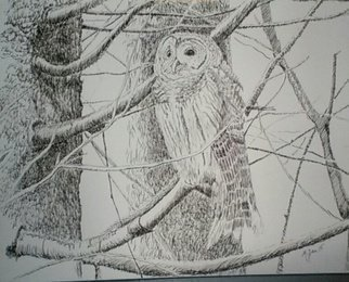 Michael Garr; Barred Owl In January, 2015, Original Drawing Ink, 11 x 14 inches. Artwork description: 241  This guy was a frequent visitor to my backyard. Got a good shot of him sheltering on a rainy day...