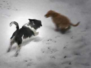 Nancy Bechtol, 'Chloe Chase Dylan', 2008, original Photography Color, 11 x 17  x 1 inches. Artwork description: 5475  dogs fly thru the snow.  Inquire- - various sizes available and on canvas or archival Epson papers...