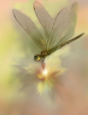 Nancy Bechtol, 'Dragon Fly Glow', 2008, original Photography Other, 11 x 14  x 1 inches. Artwork description: 5871  Client work. Not for Sale. request if reviewing for article. dragon fly glows transmits an energy for healing, warmth and safe passage.feel the positive vibes in this work. ...