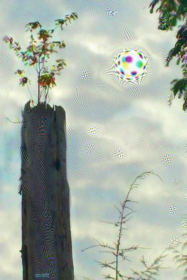 Nancy Bechtol; treetop cosmic view, 2017, Original Photography Other, 24.1 x 28 inches. Artwork description: 241 surreal, colorful, mindful, meditative, land, cosmic...