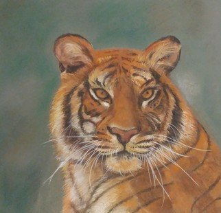 Shakeeba Waseh; Tiger, 2018, Original Pastel, 24 x 12 inches. Artwork description: 241 My sencond detailed painting of a tiger inspired by a picture in a magazine. ...