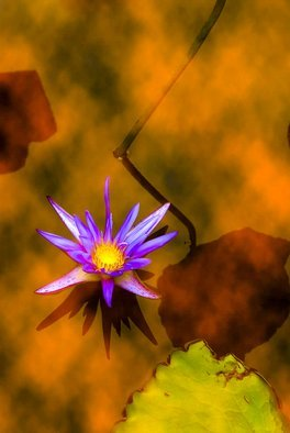 Jean Dominique  Martin; Lotus, 2021, Original Digital Art, 26 x 40 cm. Artwork description: 241 Lotus flower...