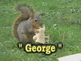 Michael Pickett, 'George', 2009, original Photography Other, 7 x 5  x 0.1 inches. Artwork description: 3495   Photo From Video,