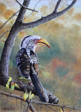 Stephen Powell; Makalali Yellow Billed Ho..., 2011, Original Painting Oil, 365 x 505 mm. Artwork description: 241  Southern Yellow- billed HornbillOil Painting 365 X 505 mm.Reference gathered whilst participating inSiyafunda Volunteers on Makalali Game Reserve South Africa ...