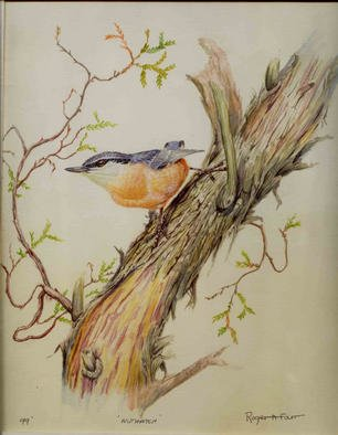 Roger Farr, Nuthatch, 1999, Original Watercolor, size_width{Nuthatch-1015523484.jpg} X 14 inches