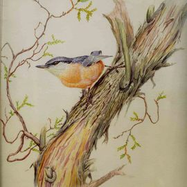 Artist: Roger Farr, title: Nuthatch, 1999, Original Watercolor