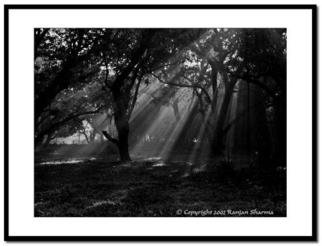 Ranjan Sharma; Ray Of Hope, 2006, Original Photography Black and White, 20 x 12 inches.