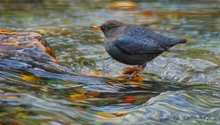 R Christopher Vest; American Dipper, 2007, Original Computer Art, 14 x 7 inches. Artwork description: 241  an example of my bird painting as seen at