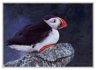 R Christopher Vest; Painted Puffin, 2007, Original Computer Art, 15 x 11 inches. Artwork description: 241 i photographed puffins nesting at mathias seal island, and used the reference to create a number of digital paintings. this image will be signed and professionally printed using  the giclee'process.  ...