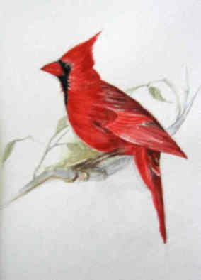 Luisa Cleaves Luisa F. V. Cleaves Gallery, Cardinal, 2006, Original Watercolor,    inches