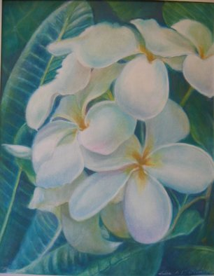 Luisa Cleaves Luisa F. V. Cleaves Gallery, Plumeria, 2006, Original Drawing Gouache,    inches