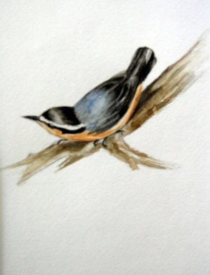 Luisa Cleaves Luisa F. V. Cleaves Gallery, nuthatch, 2006, Original Watercolor,    inches