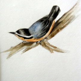 Luisa Cleaves Luisa F. V. Cleaves Gallery, , , Original Watercolor, size_width{nuthatch-1156598704.jpg} X 26 inches