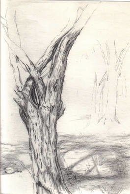 James Miller; Study Of Mesquite, 2000, Original Drawing Pencil, 12 x 9 inches. Artwork description: 241   Study of tree and shade in a Rio Grande Valley thicket.  ...