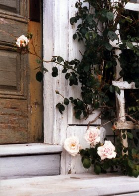 Ruth Zachary; Memorys Roses, 2012, Original Photography Color, 8 x 10 inches. Artwork description: 241 Lush pale pink roses and dark green leaves on wooden trellis, old textured door and steps. Monhegan Island, Maine. Larger size available ( 11 x 14, $98) ....