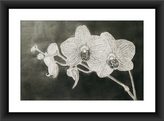 Shelton Barnes; Orchid, 2020, Original Drawing Graphite, 11.7 x 16.5 inches. Artwork description: 241 This piece is done on a A3 size paper   180 gsm   using graphite.  Sold without frame. ...