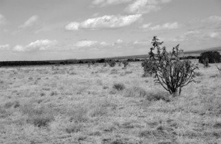 Susan Brannon; Cactus, 2012, Original Photography Black and White, 11 x 14 inches. Artwork description: 241     Cactus, Albuquerque, New Mexico, desert, photography, susan brannon, clouds, landscape, black and White, Black & white, sky, home, Native American, Indians, reservation, clouds, sunlight                 ...