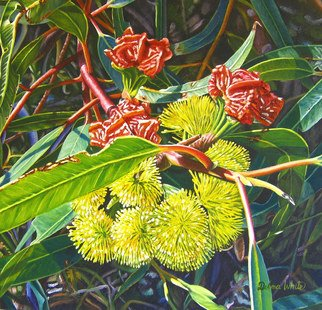 Delma White; Illyarrie Blossom, 2010, Original Painting Oil, 40 x 40 cm. Artwork description: 241  Gum tree blossom. I fyou would like Delma to paint on commission contact at delmaw@ msn. com...