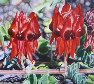 Delma White; Summer Colour, 2010, Original Painting Oil, 25 x 22 cm. Artwork description: 241  The beautiful Sturts Desert Pea is a flash of beauty in the harsh Australian deserts. ...
