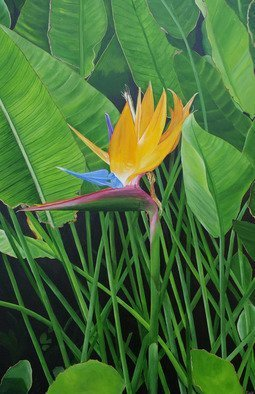 Steven Fleit; Bird Of Paradise, 2019, Original Painting Acrylic, 24 x 36 inches. Artwork description: 241 A beautiful flower found along a path bordering the ocean in South Beach, Miami, Florida. ...