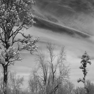 Steven Brown; Trees And Clouds, 2012, Original Photography Black and White, 16 x 16 inches. Artwork description: 241   black & white, nature, fine art, fine art photography, landscape, trees, clouds, sky      ...