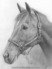 Artist: Enaile D. Siffert's, title: Portrait of Calypso, 2008, Drawing Pencil