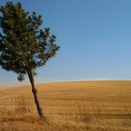 Artist: Debbi Chan title: another lone tree, 2012, Original Color Photograph