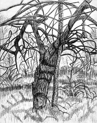 Keith Thrash; Mock Orange, 1981, Original Drawing Pencil, 14 x 17 inches. Artwork description: 241  Early drawing of unique mock orange on river bottom land west of Demopolis. ...