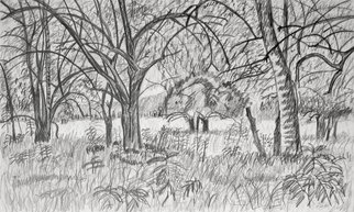 Keith Thrash; Trees By A Field, 1981, Original Drawing Pencil, 18 x 13 inches. Artwork description: 241  Mock orange grove on riverbottom land west of Demopolis. ...