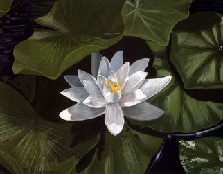 Tatyana Bondareva; White Water Lily, 2010, Original Painting Other, 35 x 25 cm. Artwork description: 241   Lilies, water lily, gouache  ...