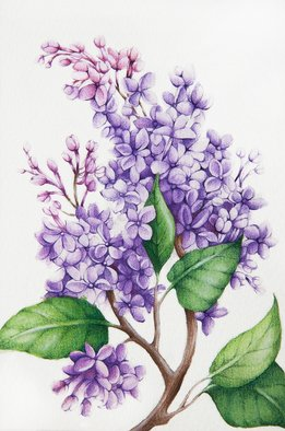 Tatiana Azarchik; Lilac, 2015, Original Watercolor, 99 x 147 mm. Artwork description: 241 Lilac branch.  In the language of flowers, purple lilacs are the symbol of first love.  I used coloured pencils and watercolor.  All of my works are painted on the watercolor paper. ...