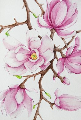 Tatiana Azarchik; Magnolia, 2015, Original Watercolor, 99 x 147 mm. Artwork description: 241 Pink magnolia in blossom.  Magnolia flowers are a symbol of purity and nobility in Asian culture, they blossom in spring and charm us with their unique scent.  I used coloured pencils and watercolor.  All of my works are painted on the watercolor paper. ...