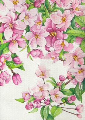 Tatiana Azarchik; Cherry Blossom, 2015, Original Watercolor, 125 x 174 mm. Artwork description: 241 The main reason for spring being my favorite season is the view of cherry blossom.  The cherry blossom is a beautiful flower that grows on cherry trees and that is closely related to the rose.  There is nothing more beautiful for me than looking at pink petals ...