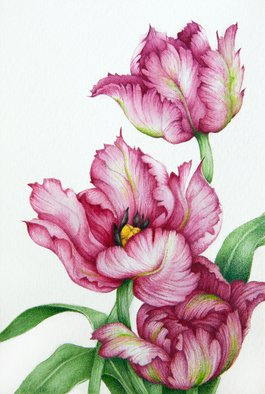 Tatiana Azarchik; Red Parrot Tulips, 2016, Original Watercolor, 99 x 147 mm. Artwork description: 241 Parrot tulips are very large and brightly coloured.  As a result, the flowers are extremely flamboyant.  If you want dramatic tulips, these are a great choice.  I used coloured pencils and watercolor.  All of my works are painted on the watercolor paper. ...